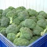 brocolis et maladie