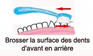 brossage des dents du fond, d'avant en arrière