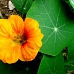 médecine douce pour soigner la bronchite