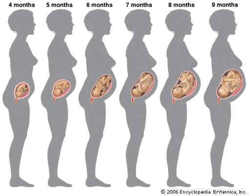 La grossesse mois par mois
