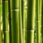 bambou et beauté