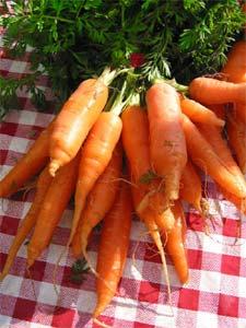 les carottes riches en antioxydants