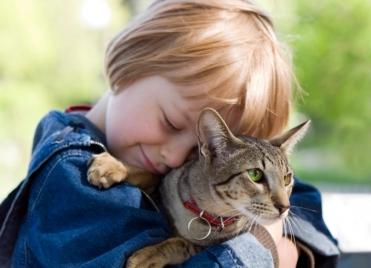 colliers pour chiens et chats toxiques